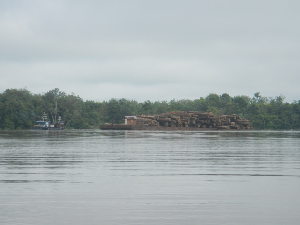 Aktivitas Loging Masih Ada