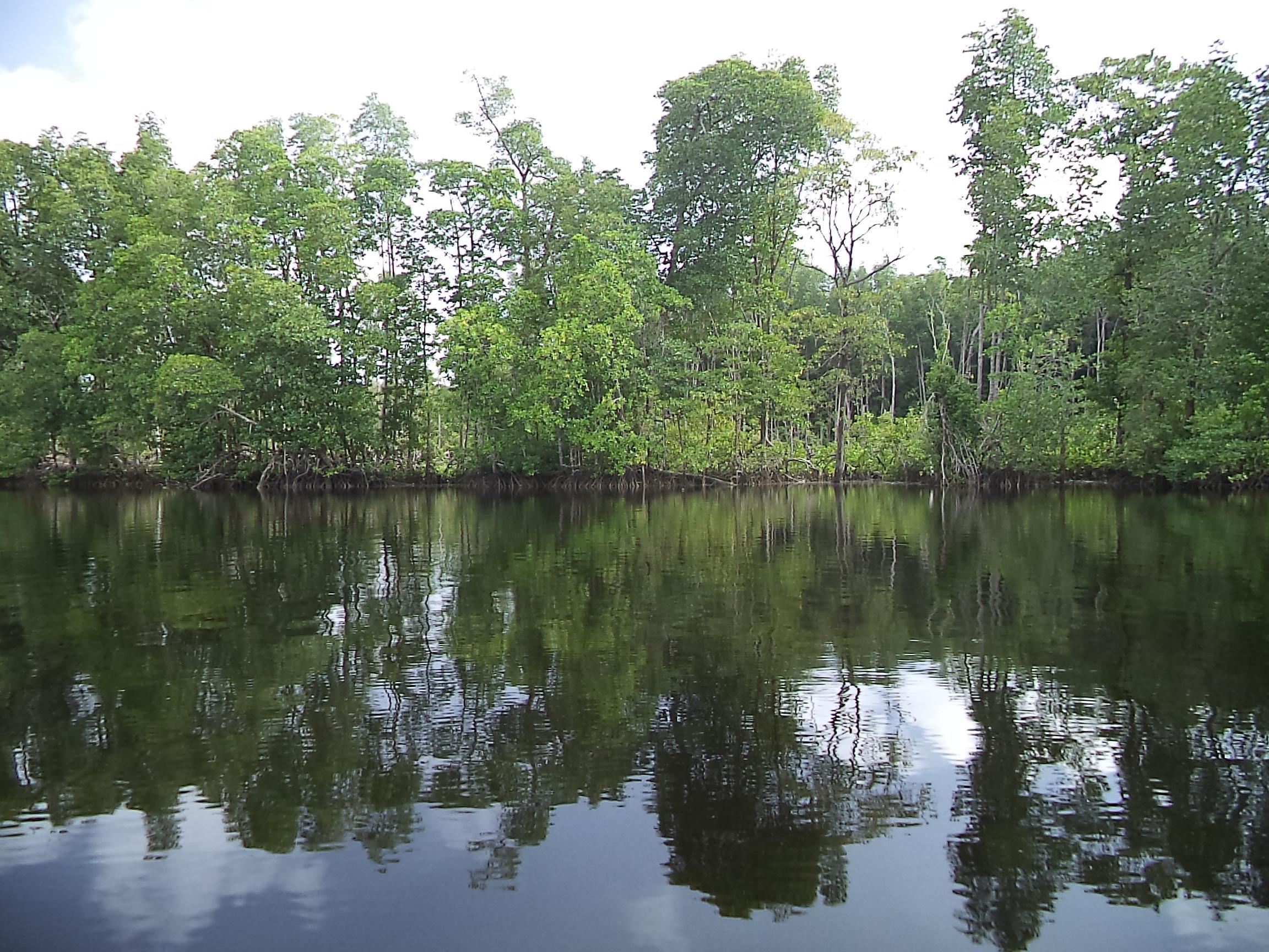 Degradasi Mangroves