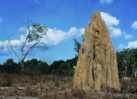Bomi atau Musamus, Merauke – Papua