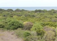 Hutan Pantai SM Pulau Rambut