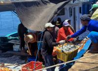 Ikan segar dari tangan nelayan Pulau Sapeken