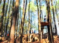 Konservasi Pohon Pinus, sebagai potensi wisata alam