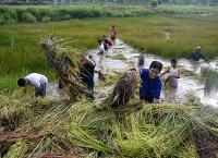 Membersihkan Danau dari Tanaman yang Tidak Produktif