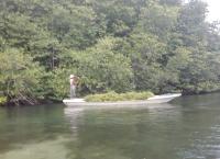 Menjaga Kelestarian Mangrove Dengan Hukum Adat