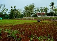 Pemanfaatan Lahan untuk Pertanian