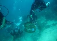Pengangkatan mahkota berduri predator terumbu karang oleh Polhut, Masyarakat dan Polairud, Perairan Pulau Menjangan Bali