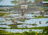 Pengelolaan Rawa, sebagai mata pencaharian dari flora hingga fauna, dari ikan hingga enceng gondok