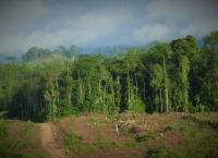 Perkebunan Sawit Merambah Gorontalo