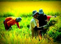 Pertanian adalah hidup matinya negeri ini