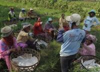 Petani di Negara Agraris