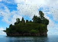 Pulau Paniki