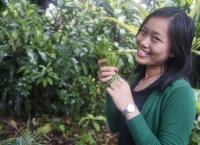 Tanaman Obat Ginseng