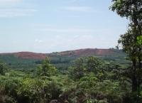 Pepohonan kayu berubah menjadi Hutan Sawit