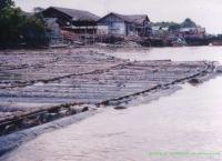 Studi Konflik Kalimantan Tengah, Mentangai - Kapuas - 2002