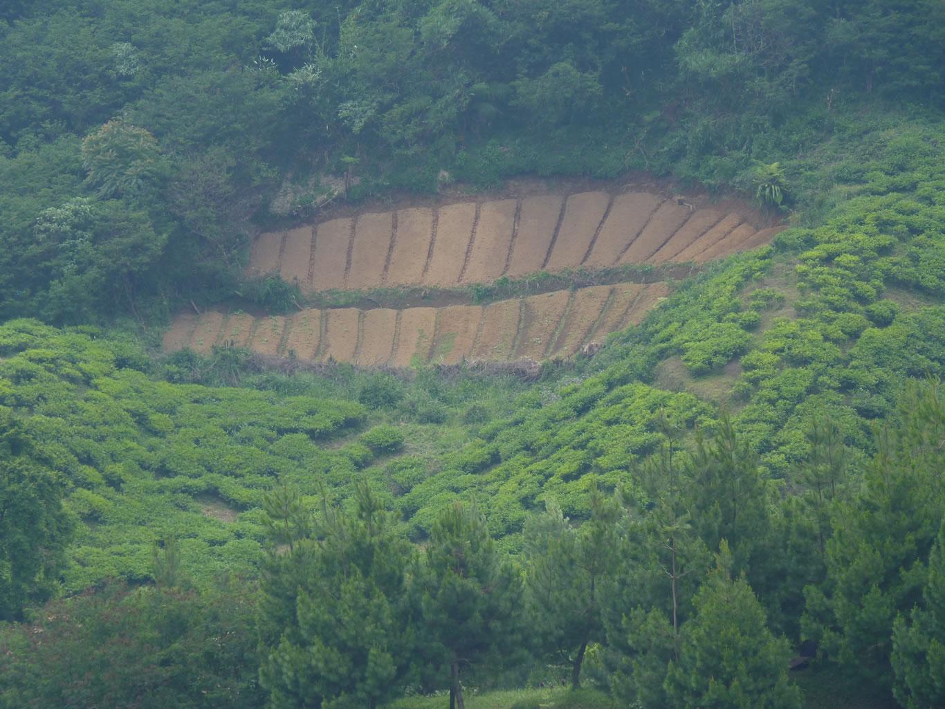 hutan-dirusak-kebun-teh-meluas-yang-ada-banjir-dan-erosi-dari-hulu-sampai-hilir