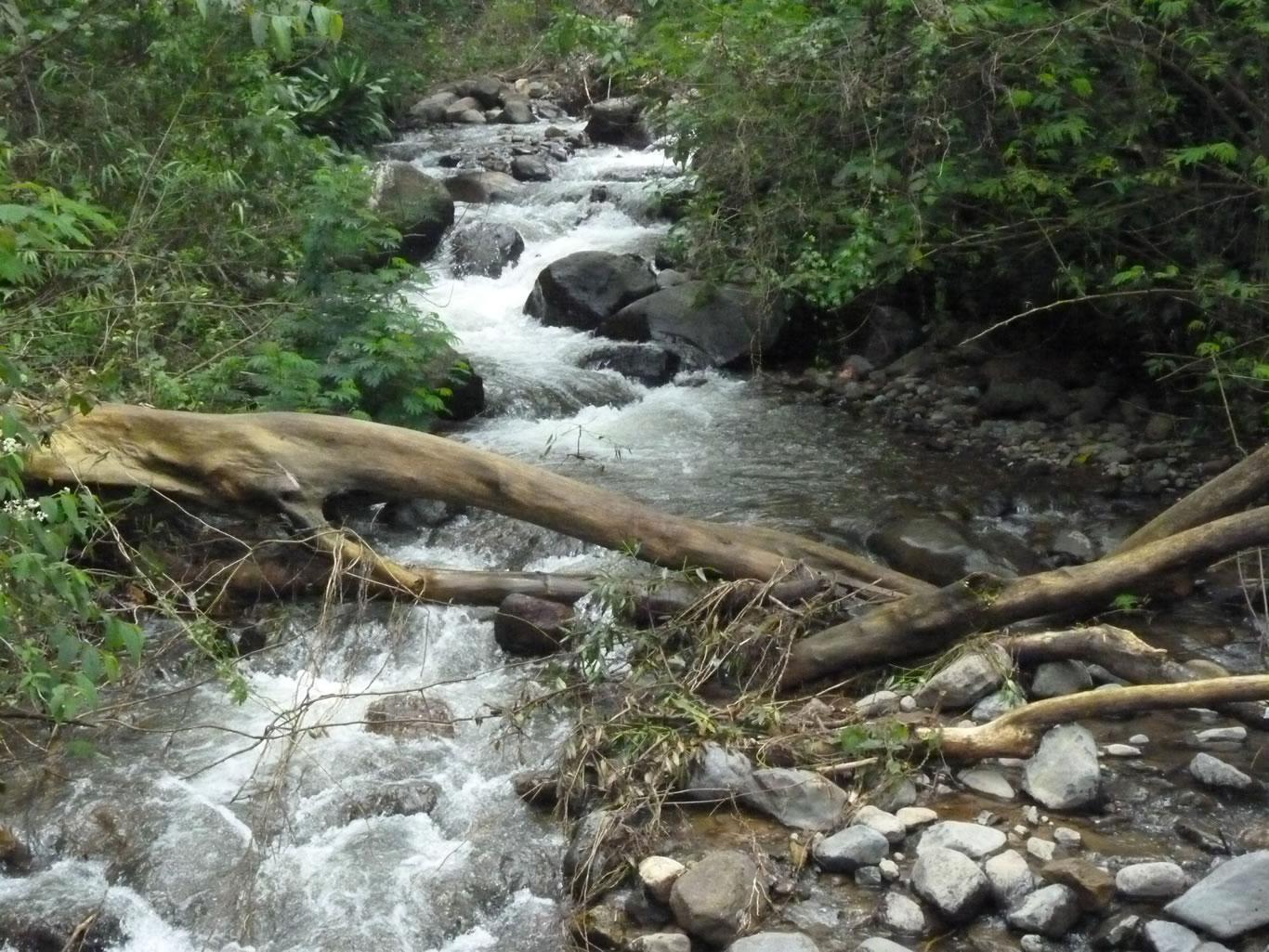 potret-alamiah-sungai-citamiang-anakan-sungai-ciliwung-masih-asri-dan-terjaga-menjadi-penghidupan-bagi-masyarakat-sekitar
