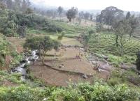landgrabbing-penggunaan-lahan-perkebunan-teh-menggerus-hutan-tersisa-di-hulu-sungai-ciliwung-padahal-bagian-hulu-sungai-ciliwung-merupakan-kawasan-lindung-menurut-rtrw-kab-bogor-2005-2025
