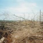 Intip Hutan April 2003