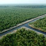 Cabut Kebijakan Perpanjangan Batas Waktu Penggunaan Kayu Dari Hutan Alam Untuk Industri Pulp Sampai 2014
