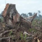 JPIK Sumatera Selatan: Tolak Sertifikat PT. RHM