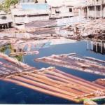 Potret Hutan Indonesia: 15,2 Juta Ha Hutan Telah Hilang
