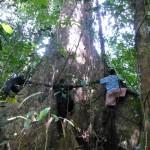 Press Release: Ekspansi Perkebunan Tebu Dilanjutkan, Kehidupan Masyarakat Kepulauan Aru Kembali Terancam