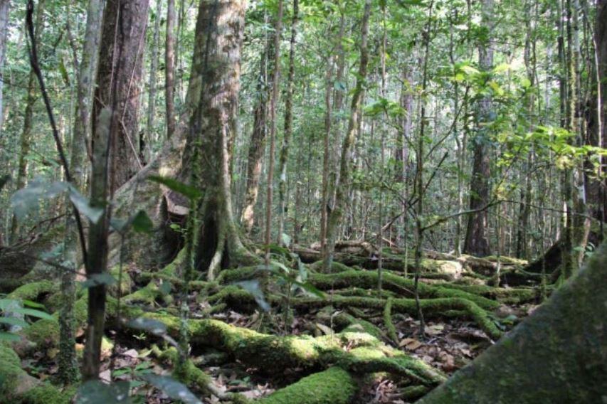 Intip_hutan_sep-des_2015_Artikel5_gmb1