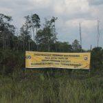 Peningkatan Kapasitas CSO dalam Pemantauan dan Advokasi Pengurangan Deforestasi di Indonesia
