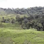 Hutan, Masyarakat Kota, dan Alam Bawah Sadar