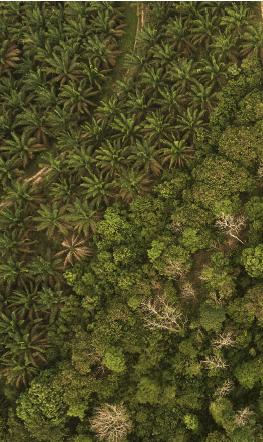 Hutan Lindung dan Sawit_Gambar1