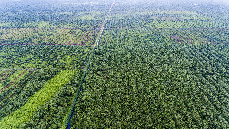 palm oil bill