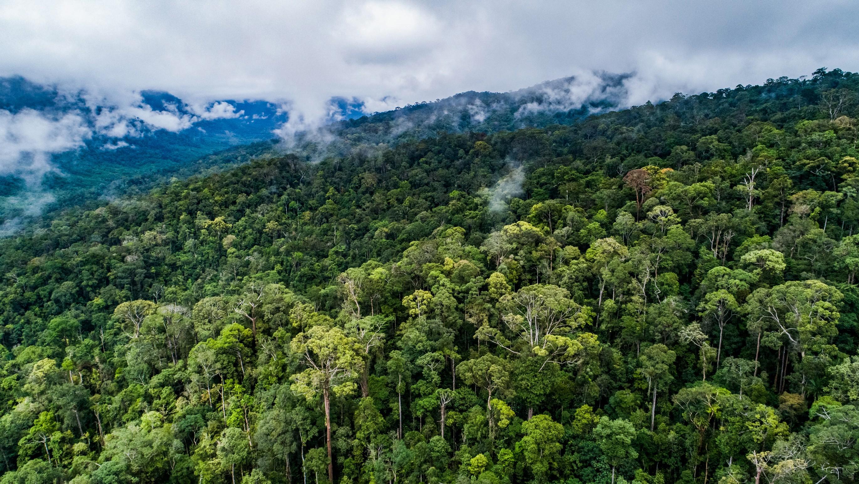 forest management unit